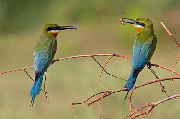 Phuket Bird Watching Tour Day Trip
