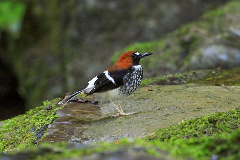 Thale Ban Bird Watching Tour 3D