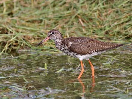 Thale Noi Bird Watching