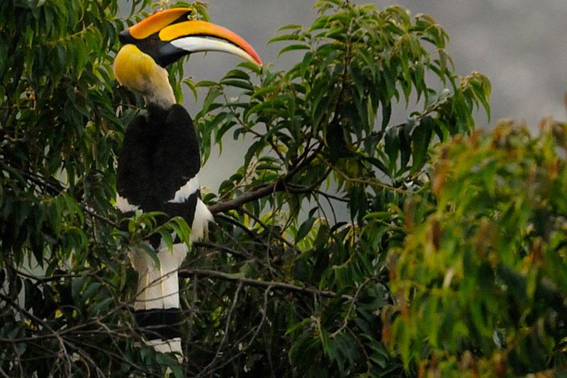 South Thailand Bird Watching Tour 8D