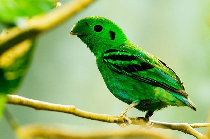 Khao Nor Chuchi Birdwatching 3D