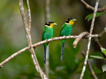Kaeng Krachan Bird Watching Tour 3D2N