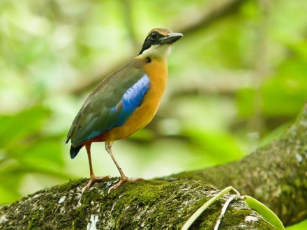 Krabi Bird Watching Tour Day Trip