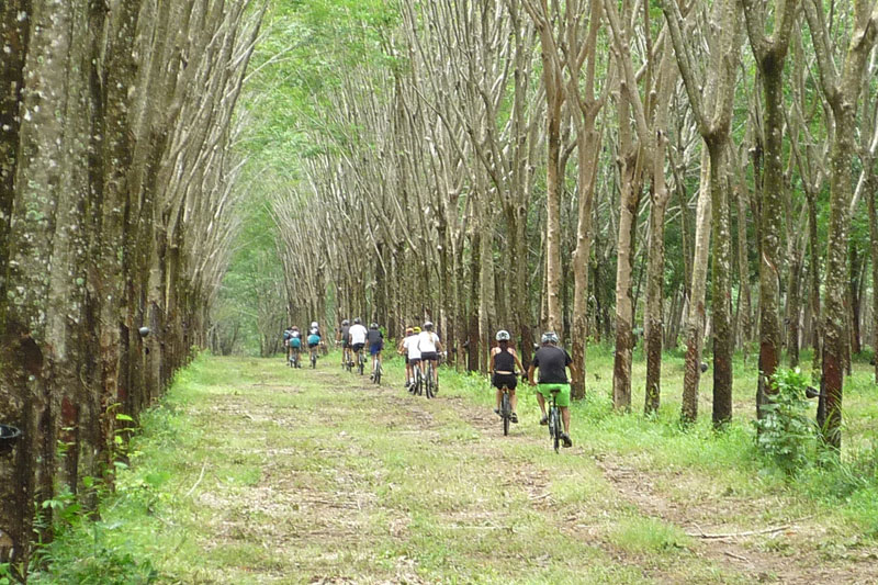 Phuket Biking Tour Northern Trails Full Day