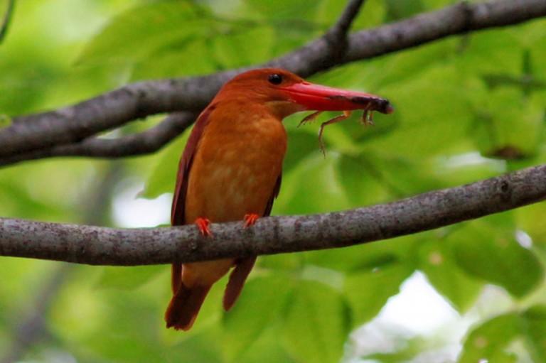 Koh Yao Noi Bird Watching Tour Day Trip
