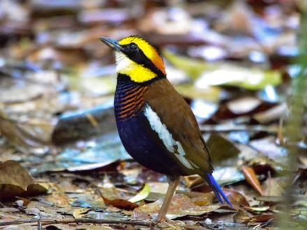 Sri Phang Nga Bird Watching Tour Day Trip
