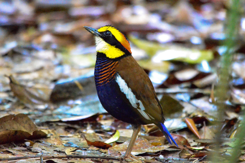 Sri Phang Nga Bird Watching Tour Day Trip